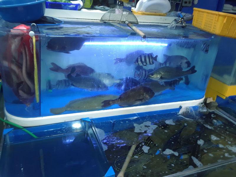 Fish market tank