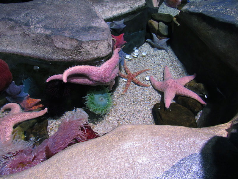 seastar-georgia-aquarium