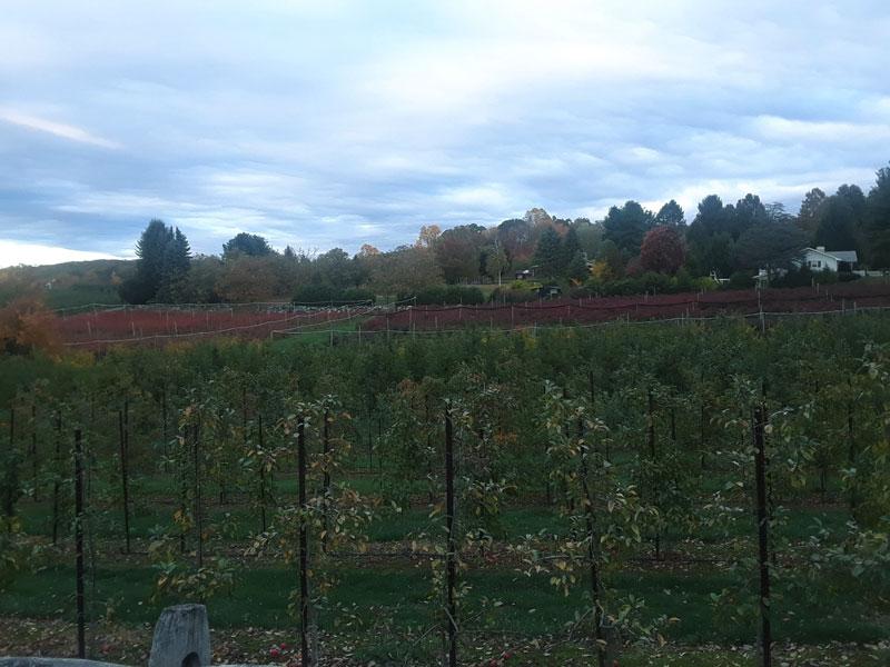 Glastonbury-Belltown-Hill-Orchards